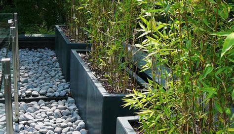 Bambou En Pot Intãģ Rieur Chestha Design Bambou Terrasse