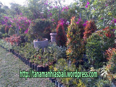 jual tanaman hias  rumput murah bali
