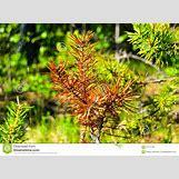 Taiga Landscape Winter | 1300 x 957 jpeg 300kB