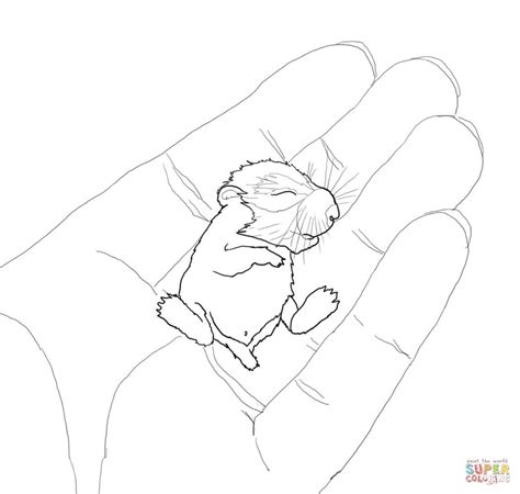 baby hamster coloring pages baby hamster in the palm coloring page free printable