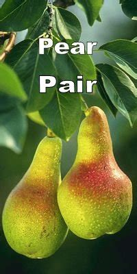 a pair of pears by meg page some confusing english words page 27