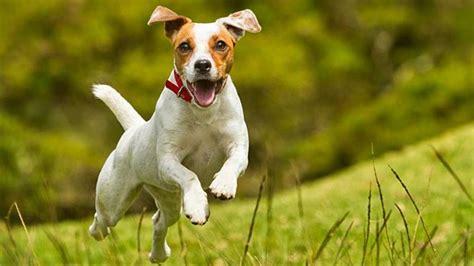 ver imagenes sorprendentes de animales 5 cosas que no sab 237 as sobre los perros