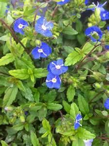 Tall Kitchen Cabinet by Blue Flowers Perennials Photos