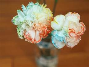 colored carnations make your own rainbow flowers pink stripey socks