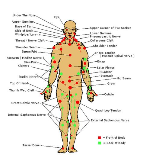 acupressure diagram of pressure points 17 self defense tips that might just save your one day