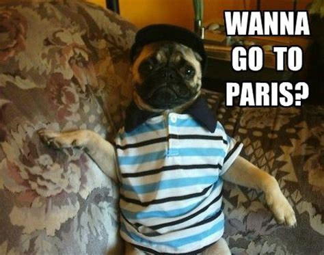 pug pun and artsy on