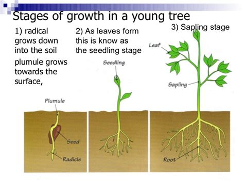 of tree 2 tree growth structure