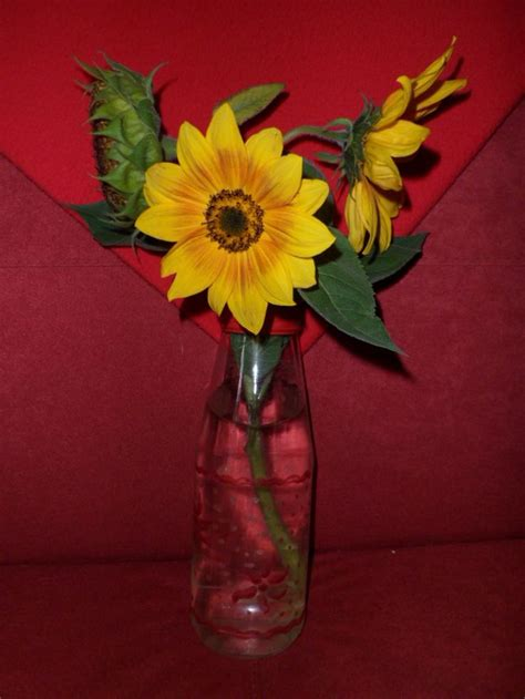 vaso con girasoli 1000 images about fiori on ombre natale and