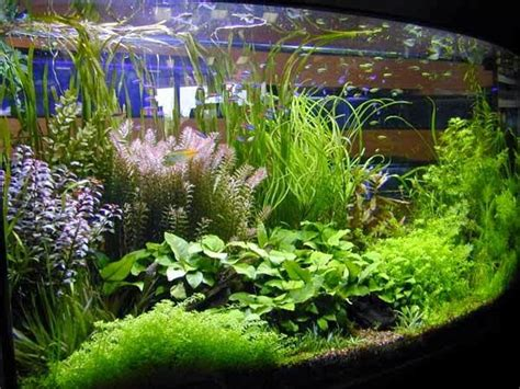 king fish aquarium perlengkapan aquascape