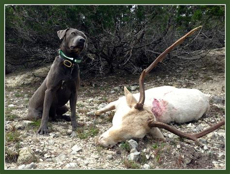deer tracking dogs can t find your wounded deer call in the deer tracking dogs