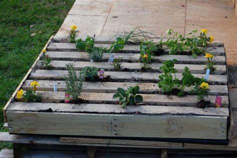 plant  herb garden   salvage wood pallet