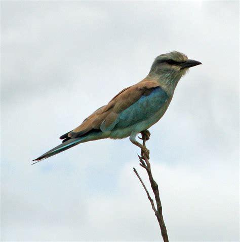 birds in kruger national park south africa travel