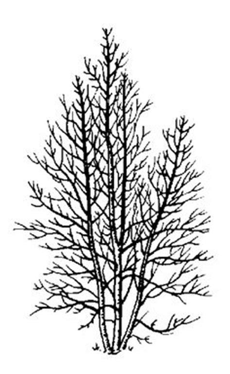 verzierung kleines hauptschlafzimmer element of the design blackenning branch tree on white