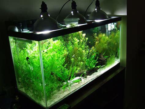 planted aquarium led lighting 1000 ideas about aquarium lighting on pinterest led