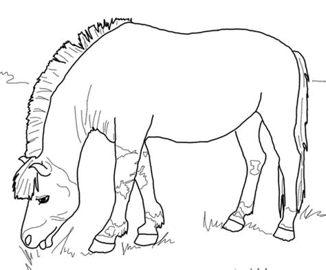 morgan horse coloring page 15 coloring pages of morgan horses breyer horses