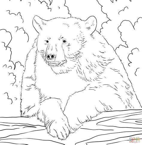 coloring page of black bear american black bear and portrait coloring page animal