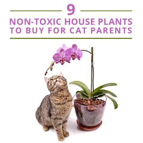 common house plants poisonous cats common house plants not poisonous to cats