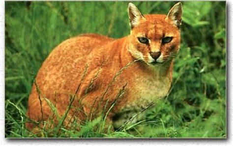 Pasir Kucing Downy 5 5l baguseven 8 jenis kucing liar yang mungkin belum