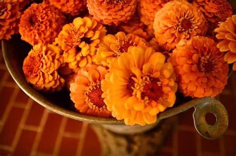fiori recisi fiori recisi biologici