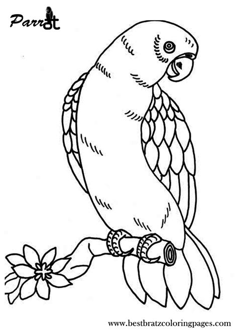 parrot coloring pages free printable parrot coloring pages for coloring