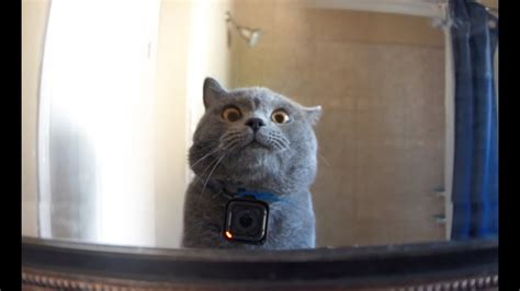 a cat gopro on a cat left home alone