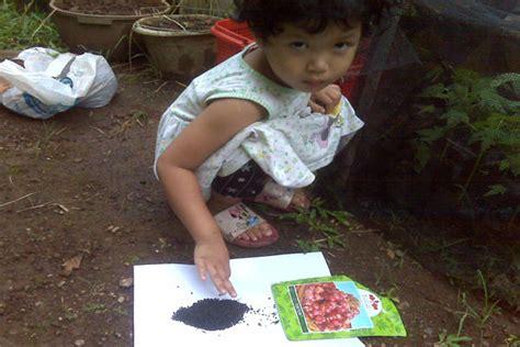 Bibit Bawang Merah Impor manis pahitnya bertani bawang merah waras farm
