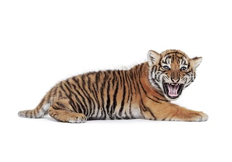 imagenes sin fondo blanco html fotos de animales con fondo blanco taringa
