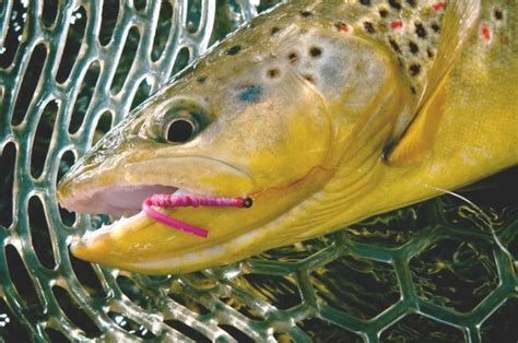 best bait best bait for trout fishing in the wilderness