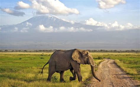 5 Safari Stuff To See by 12 Best Places To Visit In Kenya 4 Was A Surprising One
