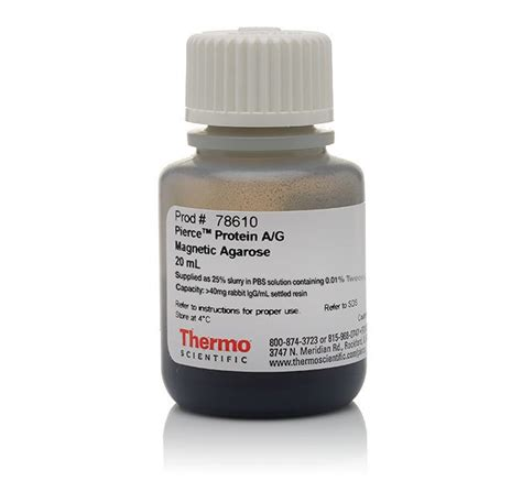 thermo fisher magnetic thermo fisher scientific protein a g magnetic