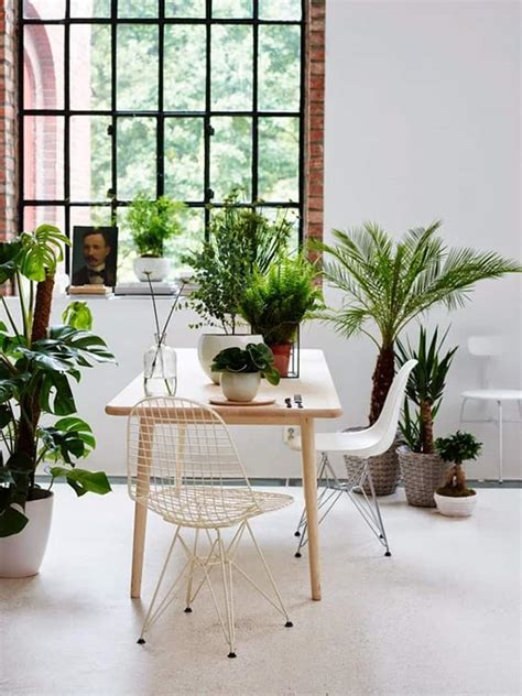 home interior plants ideas of how to display indoor plants harmoniously