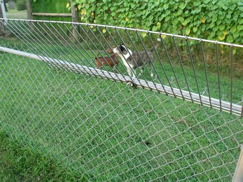 how to keep dog from jumping fence climb stopper stop dogs from jumping or climbing your