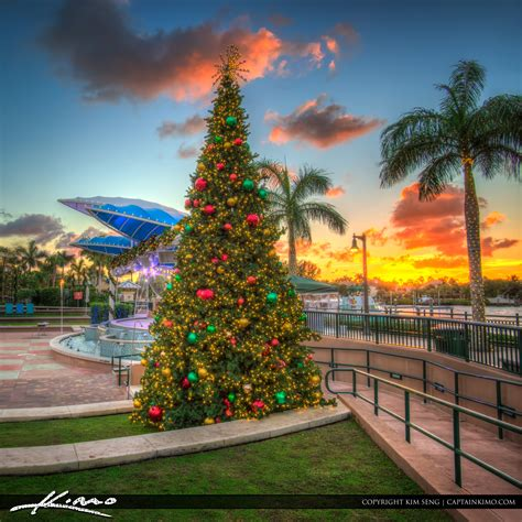 flordia xmas trees tree harbourside place sunset jupiter florida