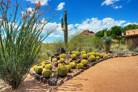 Phx Botanical Garden Desert Botanical Garden Outdoors Stories