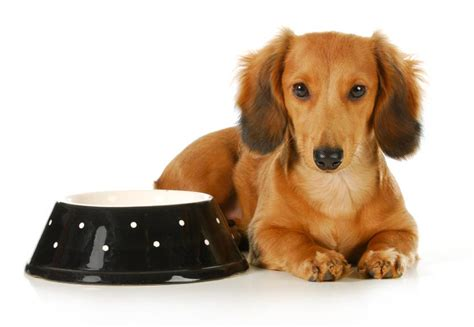 when to switch from puppy food to food when to change from puppy food to food 6 steps