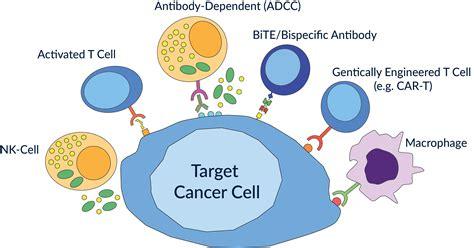 targeting pattern recognition receptors in cancer immunotherapy what is cancer immunotherapy
