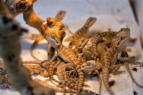 reptile room hayward reptile room hayward