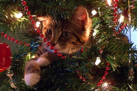 cat on top of christmas tree meme cat memes catmemes