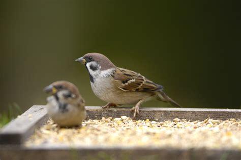 feeding birds what can i feed birds the rspb