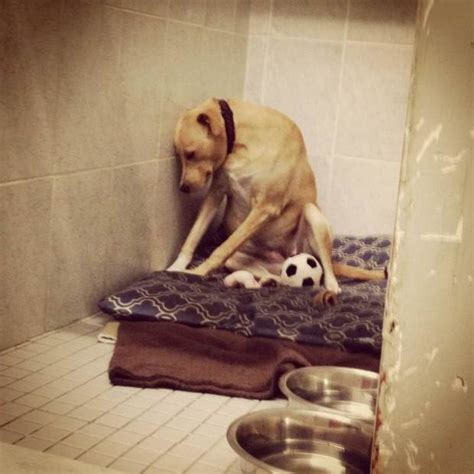 dog only eats from hand this heartbreaking snap of a dog returned to a shelter is