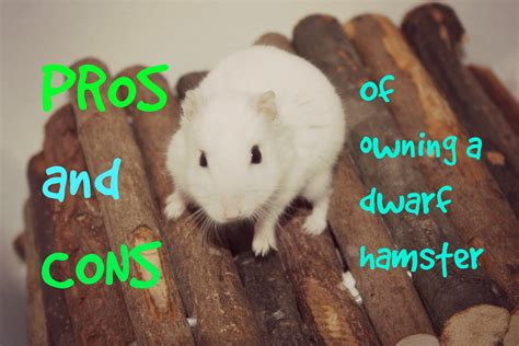 owning a pros and cons of owning a hamster