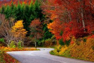 path forest autumn fall road leaves trees colorful nature wallpaper 2592x1733 354904