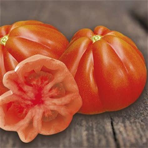 pomodori cuore di bue in vaso piante da orto innestate pomodoro cuore ligure f1