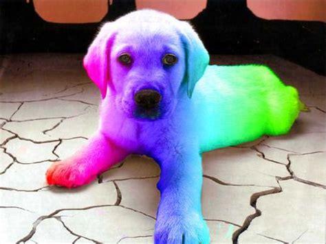 rainbow puppy 11 best rainbow dogs images on rainbow rainbow and rainbow colors