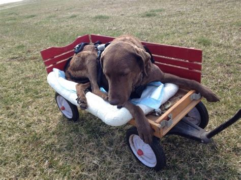 handicap dogs owner s for disabled goes viral