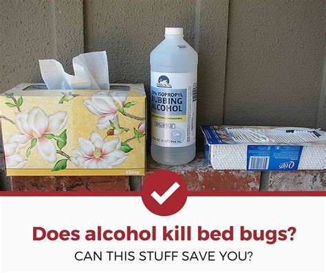 alcohol kill bed bugs bed bug exterminator cost 2019 2020 car release date
