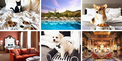 best pet friendly hotels 9 best pet friendly hotels for 2017 friendly