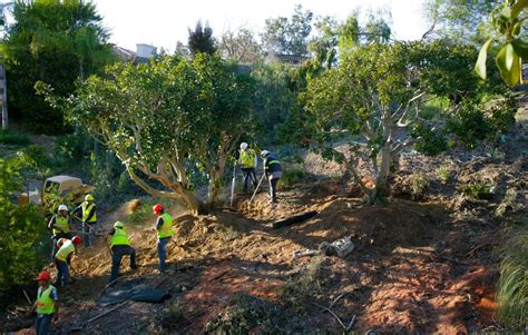 commercial tree removal trimming services in san diego