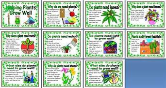 Ordering Flowers Ks2 Science Teaching Resource Helping Plants Grow Well Printable Posters For Classroom Display
