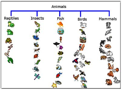 animal classification online game (free) | cc cycle 1